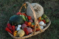 Bounty basket 1